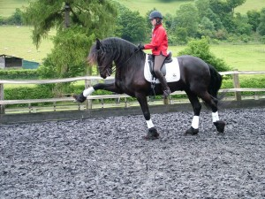 Euwe - Friesian. The training at Turville has been incredible. Euwe has learnt all the lateral work and is now moving on to more advanced work such as piaffe. This is something I would never have achieved without the superb training we have received during our regular stays. We really cannot thank Diane and team enough. Clare Axon-Saunders