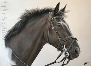 Cole. Laurens showjumper who she tragically lost at only 9yrs. Sophie did this pastel of him for her birthday. She included the white feather as one landed on him just before he passed away. A sign from the Angels.